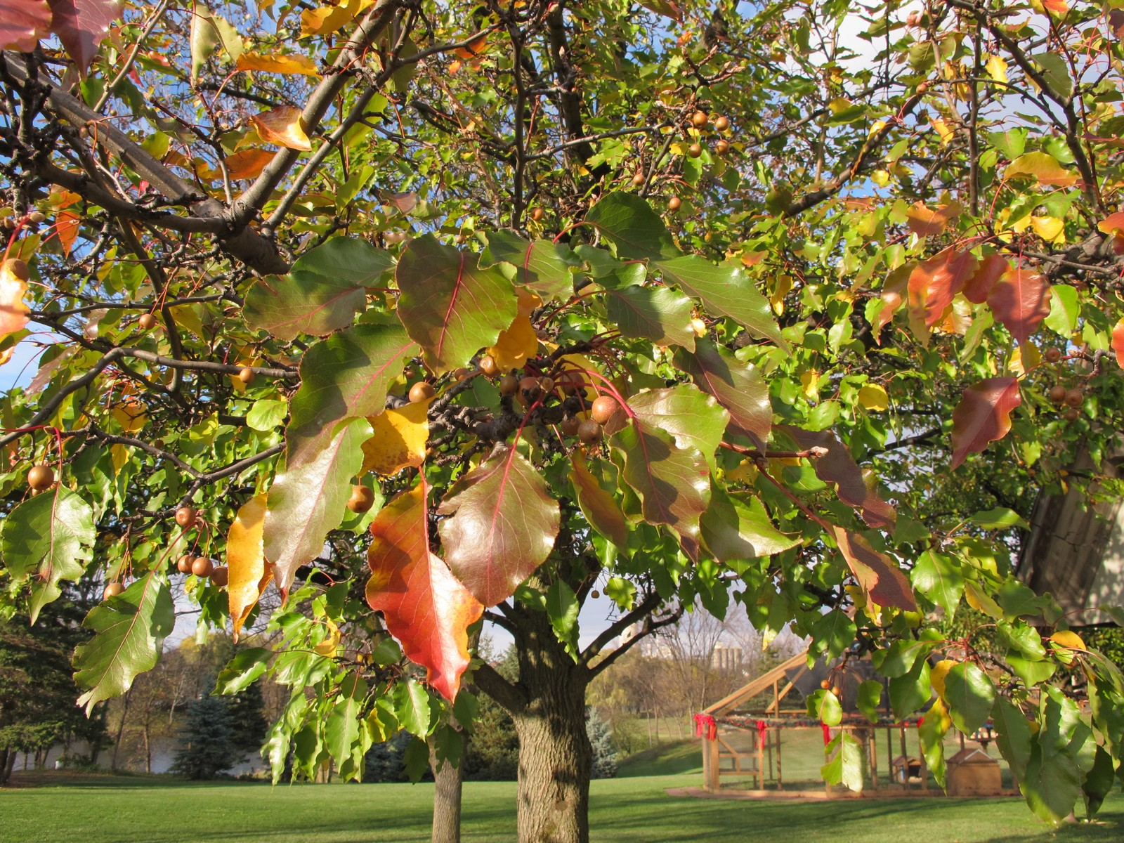 Perverdonk Wild Flowerstreesandshrubsapplecrabapple